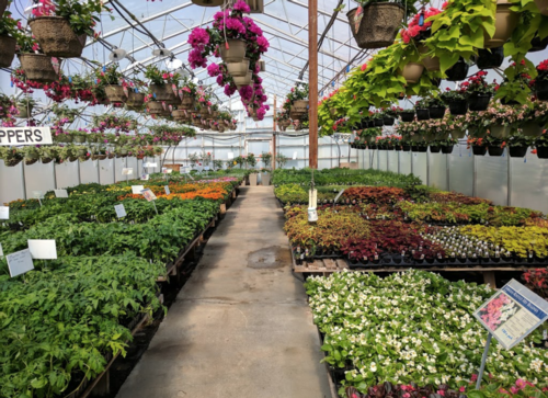 Image for $150 Gift Certificates for Shady Lane Greenhouses and Perennials