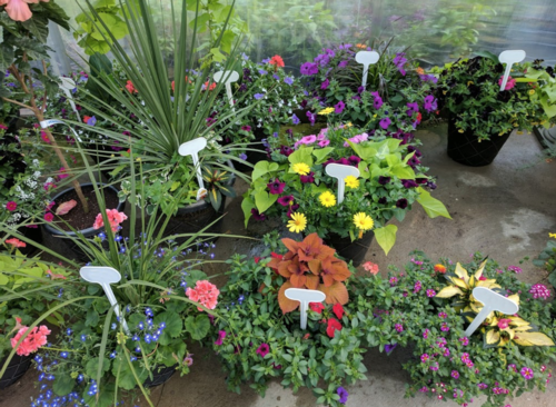 Image for $250 Gift Certificates for Shady Lane Greenhouses and Perennials